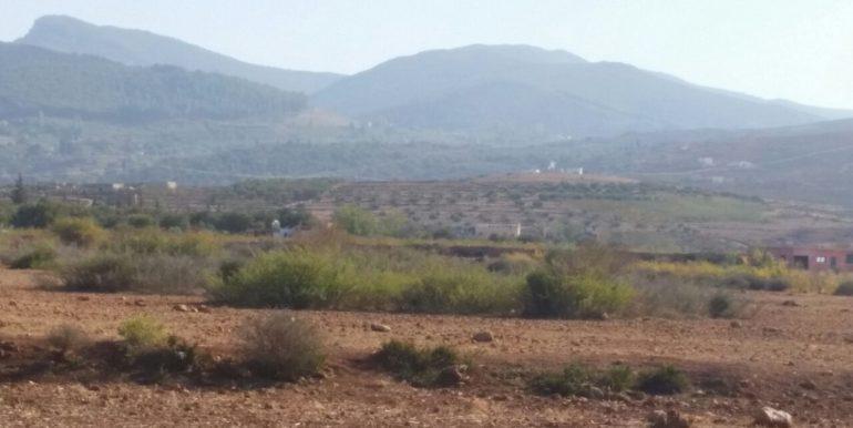 lot terrain planté d'oliviers