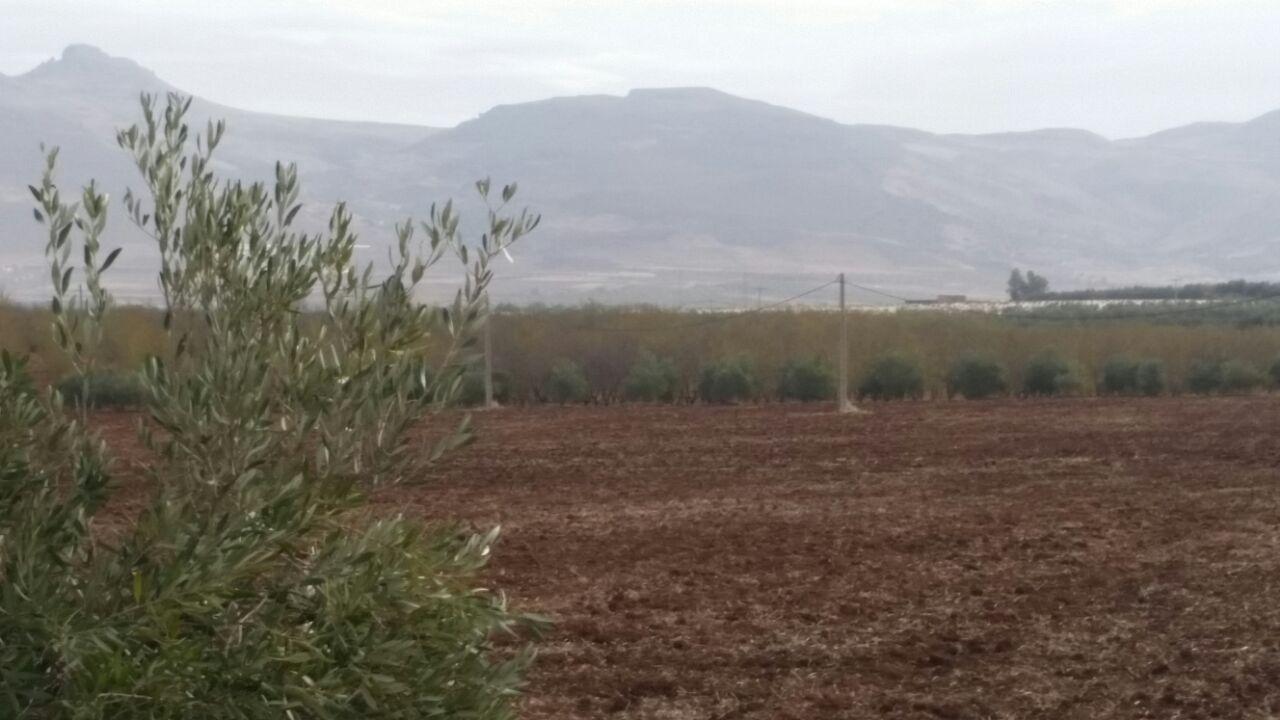 lot terrain avec quelques oliviers