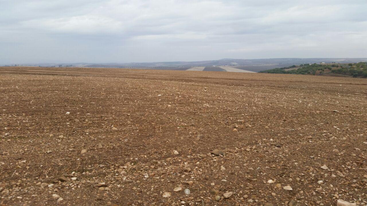 lot terrain titré avec 40 olivier
