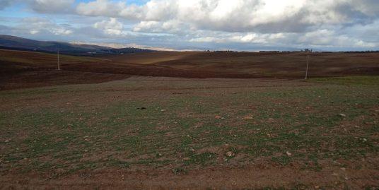 Terrain titré de 6 hectares