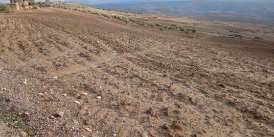 Terrain Titré de 2 hectares