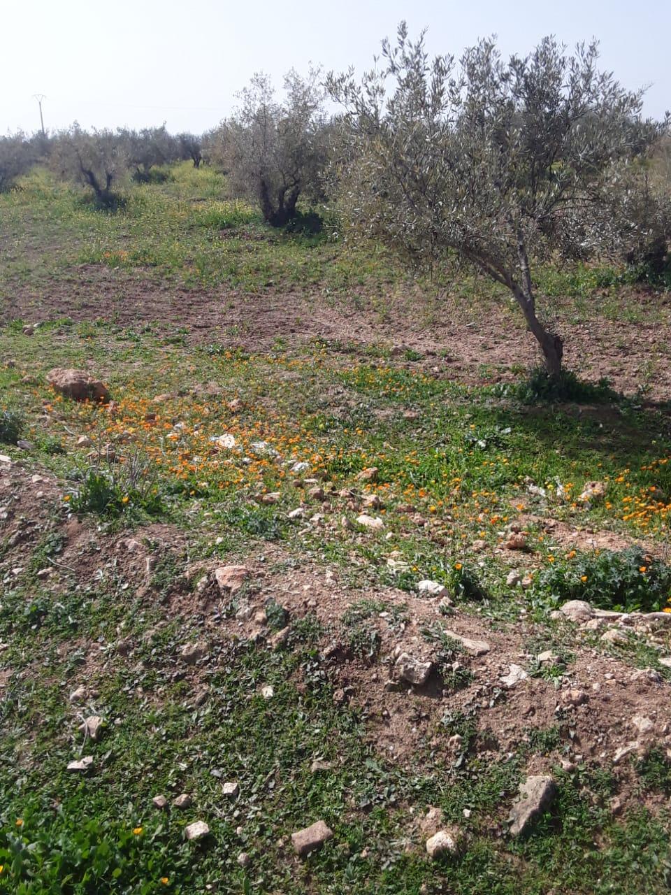 terrain  de 3 hectare